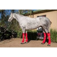 Hidez ice compression socks for horses