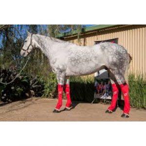Dappled grey horse wearing red Hidez Ice Compression Socks