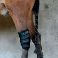 Black neoprene Horseware Ice Vibe Circulation Therapy Hock Wraps in use