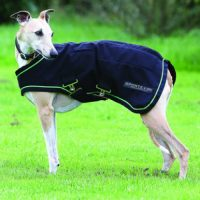 Navy blue with green accent Sportz Vibe Dog Rug in use on a whippet