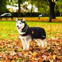 A happy Alaskan Malamute wearing a orange and black Rambo Ionic Dog Rug