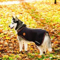 Alaskan Malamute wearing a orange and black Rambo Ionic Dog Rug