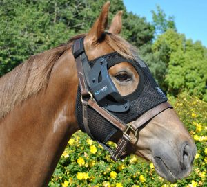 Equilume Cashel - A rechargeable equine blue light therapy headpiece for horses