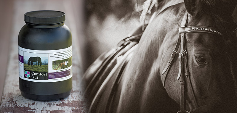 Hero image showing a tub of Comfort Gut next to a sepia image of a horse