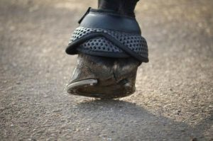 A single horse hoof covered by a black over reach boot