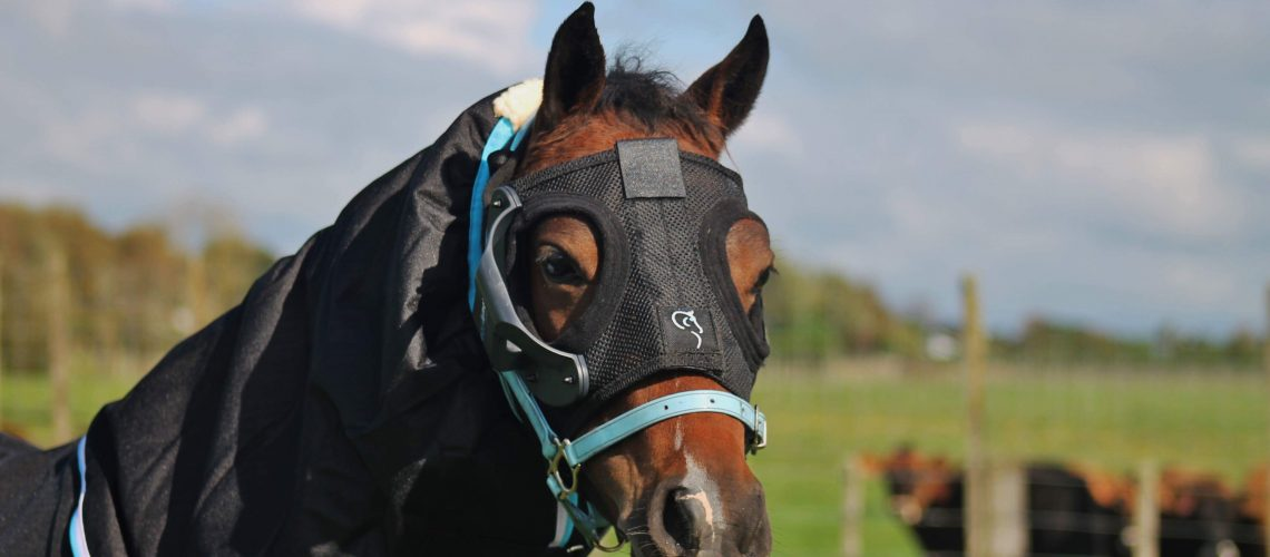 Pony wearing a Equilume Cashel headpiece and cup